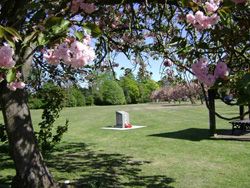 Memorial Plaque and Cherry Trees
